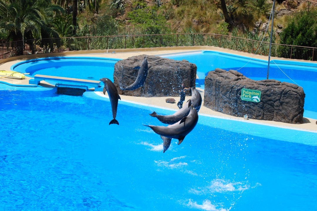 Gran Canaria Activities: Palmitos Park - Dolphins at Palmitos Park, Gran Canaria